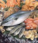 魚介類集合 ブリ他
