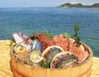 海と魚介類集合 長崎県平戸市
