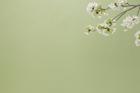 桜イメージ グリーン