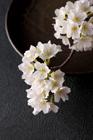 皿と桜の花