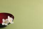 杯と桜の花