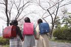 新入学の女の子3人後姿と桜