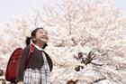 新入学の女の子と桜