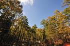 青空と紅葉のカラマツ林