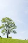 草原に立つ木と青空