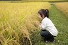 秋の田園と女の子