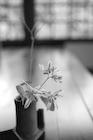 花器に生けた花 B/W