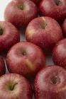 リンゴ 山形県産