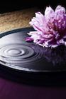 お盆の水紋と花