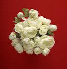 白い花のブーケ