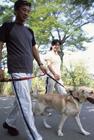 犬と散歩するミドル夫婦