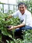 野菜を収穫するミドル男性