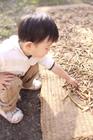 干した作物を興味深く触る男の子