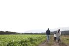 田園の畦道を歩く後姿の3人家族