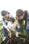 サツマイモ掘りをする男の子と2人の女性