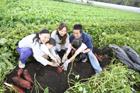 サツマイモ掘りをする2組の家族